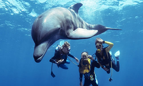 Dolphin Dive - Freeport, Bahamas $219 for 2.5 hours