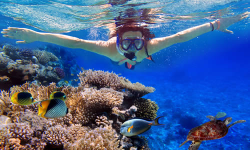 Dolphin and Snorkel Combo - Bahamas $65 for 2.5 hours