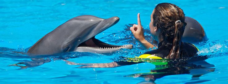 swim with dolphins in freeport bahamas
