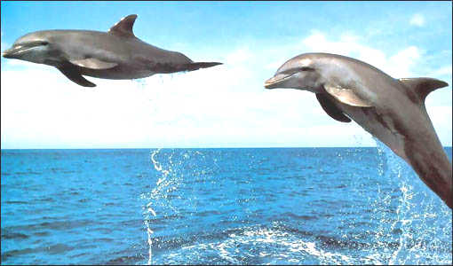 Dolphin Activities - Freeport, Bahamas 954-969-0069