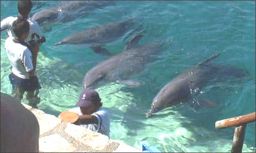 Assistant Dolphin Trainer - Bahamas $389 for 4.5 hours